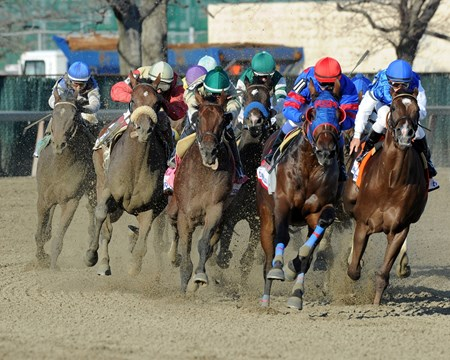 Final turn of the of the Grade I Wood Memorial at Aqueduct.