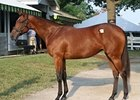 Indian Charlie filly out of grade I winner and producer Take Charge Lady brought $2.2 million.