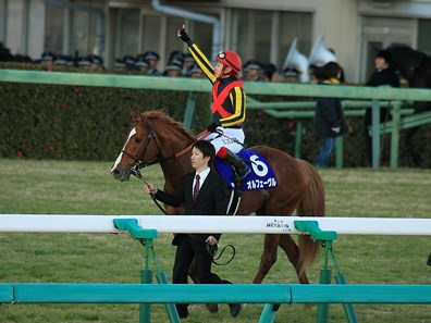 Bred by Shadai Corp. and owned by Sunday Racing Co., Orfevre is to begin his stallion career at Shadai Stallion Station in Hokkaido.