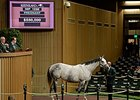 Sheikh's Serenade brought $550,000 at the Keeneland November breeding stock sale.