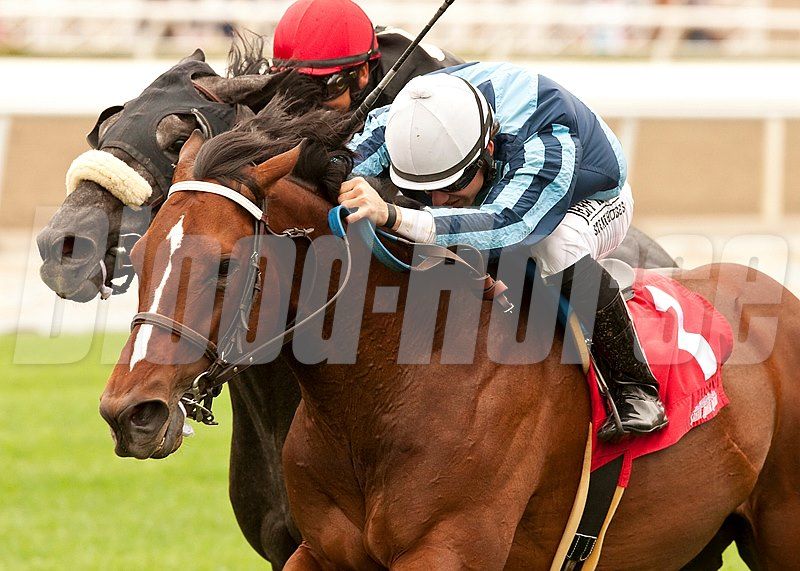 Pablo Gomez' Quick Casablanca and jockey Joe Talamo (white cap) battle down the stretch to win the Grade III $100,000 Last Tycoon Stakes at Santa Anita Park.