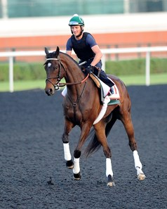 Royal Delta in Dubai for the World Cup March 27th, 2013.
