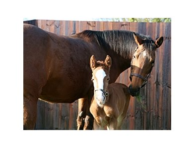 Kind and foal, a full brother to Frankel.