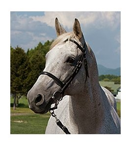 Silver Charm