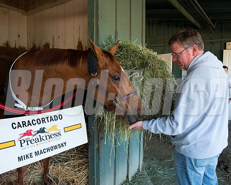 Caption:  Caracortado gets fed Skittles from trainer Mike Machowsky