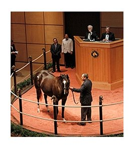 Love and Pride, hip 90, sold for $4.9 million dollars at the Fasig-Tipton November Sale.