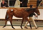Lot 761, a filly by Sea The Stars, brought 320,000 guineas at the Tattersalls December foal sale Nov. 28.