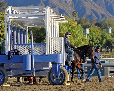 Caption:  Gate man works with a horse