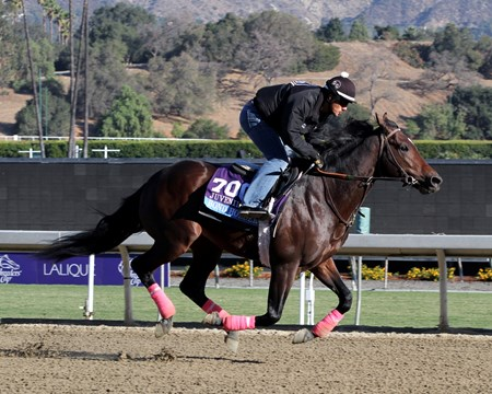 Bond Holder on the track at Santa Anita Park on October 30, 2013. Photo By: Chad B. Harmon