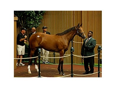 Hip 80, a filly by Malibu Moon out of Hollywood Story, sold for $1.35 million.