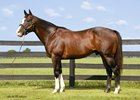 Freud stands at Sequel Stallions in New York