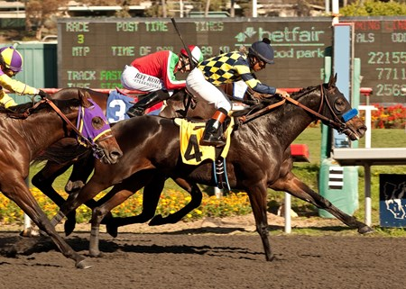 Carving, owned by ski racer Bode Miller, wins the $100,000 Real Quiet Stakes at Hollywood Park.