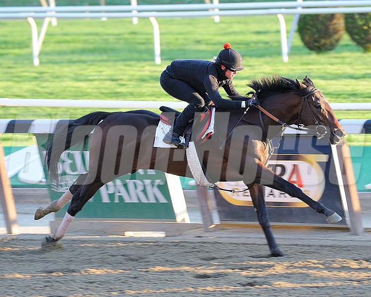 Orb works out at Belmont Park on May 13, 2013 in preperation for the Preakness Stakes.