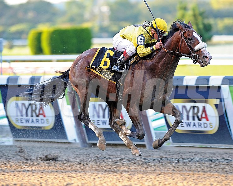 Union Rags is victorious in 2011, he would also go on to win the Belmont Stakes in 2012.