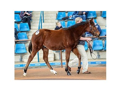 Lot 71, a Fastnet Rock colt out of Promptness, by Eddington, was the highest priced weanling at Aust$240,000.