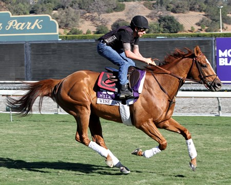 Wise Dan on the turf course at Santa Anita Park on October 31, 2013. Wise Dan is prepping for a star in the Breeders' Cup Mile.