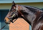 Slideshow: Training Progeny of Bernardini