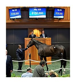 Secret Union was the Fasig-Tipton Saratoga fall mixed and horses of racing age sale topper.
