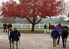 Key Indicators Steady at Keeneland November