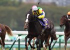 Isla Bonita aims to go one better Nov. 19 after finishing second in last year's Mile Championship at Kyoto