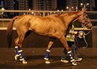 Red Cadeaux arriving at Sha Tin April 14.