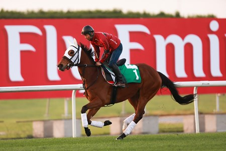 Gentildonna works at Meydan in preperation for the 2013 Dubai World Cup races.