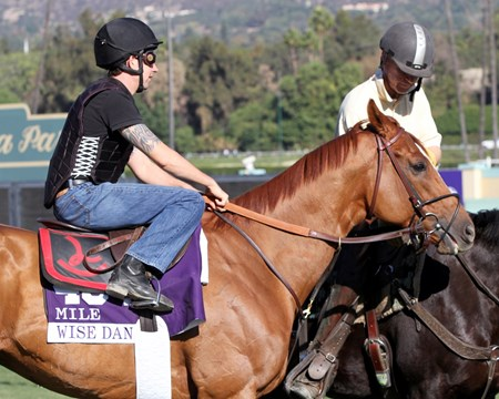 Wise Dan on the track at Santa Anita Park on October 31, 2013. Photo By: Chad B. Harmon