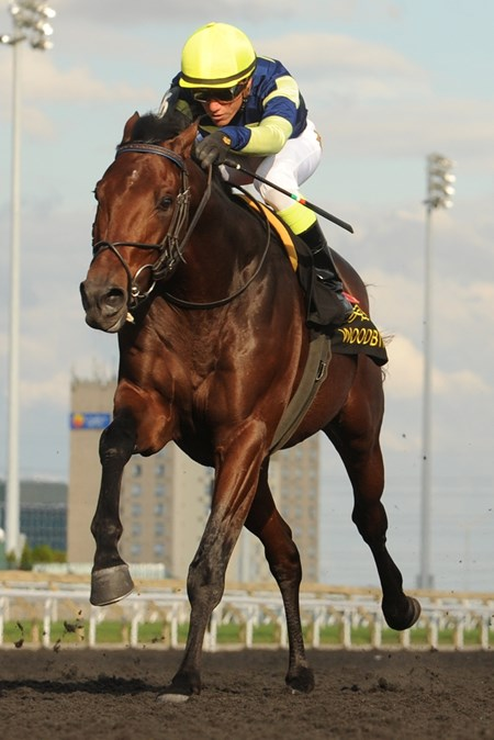 Jockey Luis Contreras guides Lukes Alley to victory in the $150,000 Durham Cup Stakes at Woodbine Racetrack.
