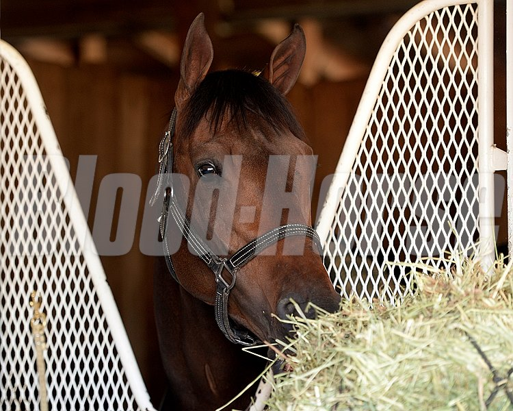Caption: General A Rod