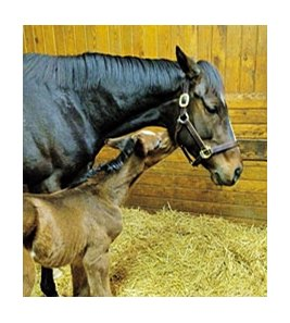 Rachel Alexandra and her Curlin colt