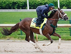 Mr. Z gallops at Churchill Downs April 19.