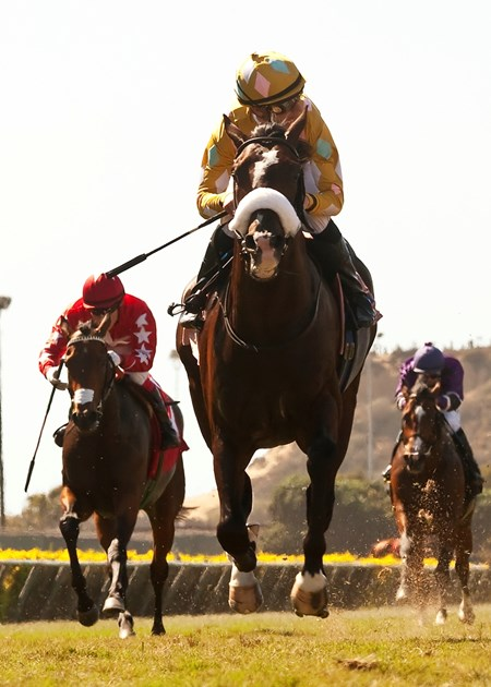 Diamond Bachelor and jockey Julien Leparoux win the $100,000 Oak Tree Juvenile Turf September 4, 2013.