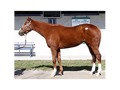Beloveda, Hip 105, sold for $205,000 at the FTK Winter Mixed Sale.