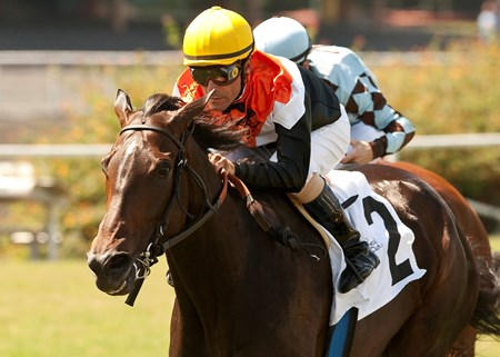 Marketing Mix and Gary Stevens hold off Dhaamer and Julien Leparoux for a victory in the Grade III $100,000 Sunset Handicap at Betfair Hollywood Park, Inglewood, CA.