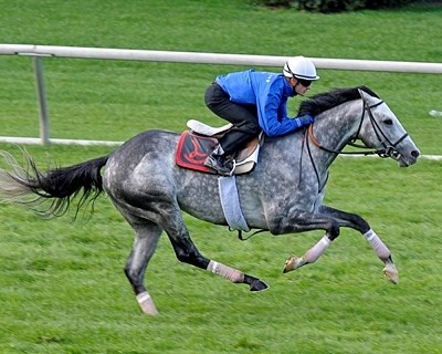 Turallure with Julien Leparoux up works at Keeneland.