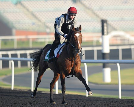 St Nicholas Abbey jogs with Joseph O'Brien at Meydan 3/29/2013.