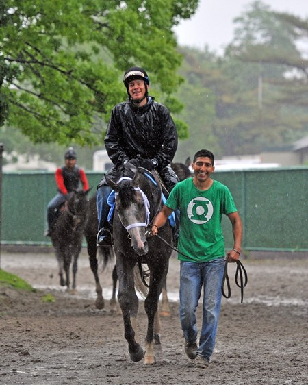 Godolphin Stables Incognito, returns to the barn Friday morning, after jogging two miles in the mud, on the Belmont training track...