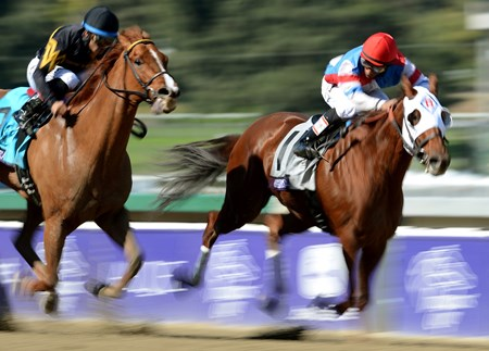 Jockey Rajiv Maragh urges Groupie Doll past Judy the Beauty to win the Breeders' Cup Filly & Mare Sprint at Santa Anita.