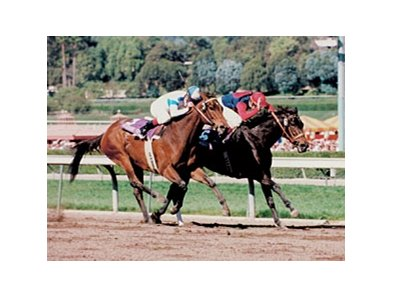 Hollywood Wildcat, with Delahoussaye in the irons, won the 1993 Breeders' Cup Distaff.