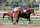 Champion Hollywood Wildcat Dies