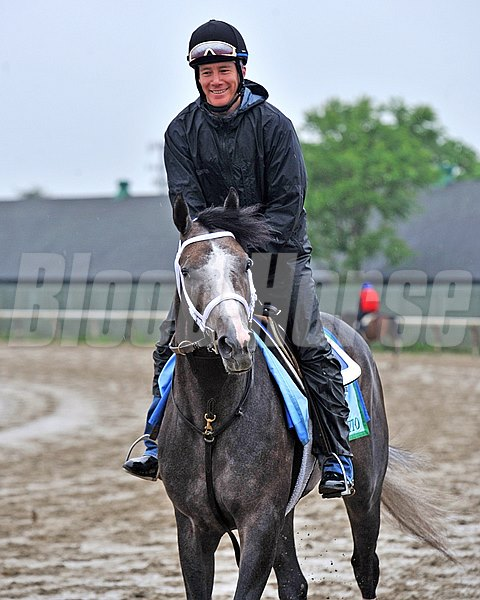 Godolphin Stables Incognito jogs two miles in the mud on the Belmont training track Friday morning...
