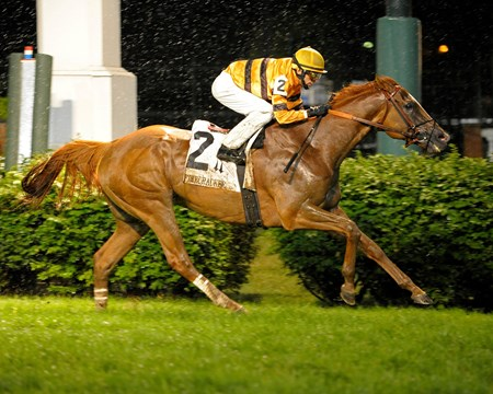 In five grade I races and a pair of grade II events, the only male in North America to take home four grade I victories, Wise Dan galloped his way through the most consistent season delivered by a racehorse in 2013—year-end honors firmly in his sights.