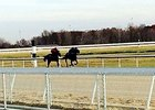 Horses training at Hollywood Gaming at Mahoning Valley Race Course.