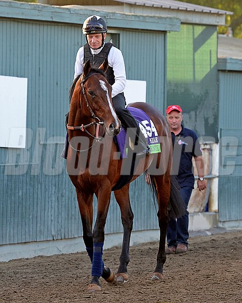 Caption:  Karakontie (JPN)