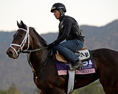 Caption:  Feathered