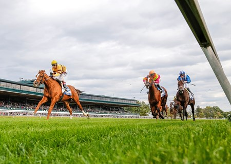 Connections and fans celebrate as Wise Dan crosses the finish line a length ahead of his rivals in the Shadwell Turf Mile. No matter what obstacles are thrown at him this season, two-time Horse of the Year Wise Dan refuses to lose.
