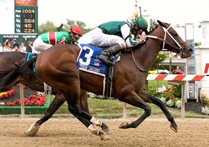 Lantana Mob Horse Profile Bloodhorse