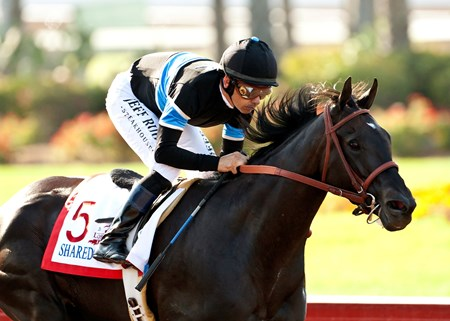 Unbeaten Shared Belief, last year's 2-year-old juvenile champion, answered the dirt question with an emphatic 4 1/4-length win in the $500,000 Grade II Los Alamitos Derby at Los Alamitos Race Course.