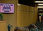 Iotapa brought $2.8 million at the Keeneland November breeding stock sale.
