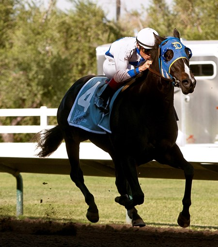 Marino's Wild Cat with jockey Silvio Amador in the irons take the Harris Farms Stakes in Fresno, California.